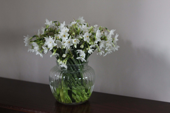 White British Narcissi Kent.JPG