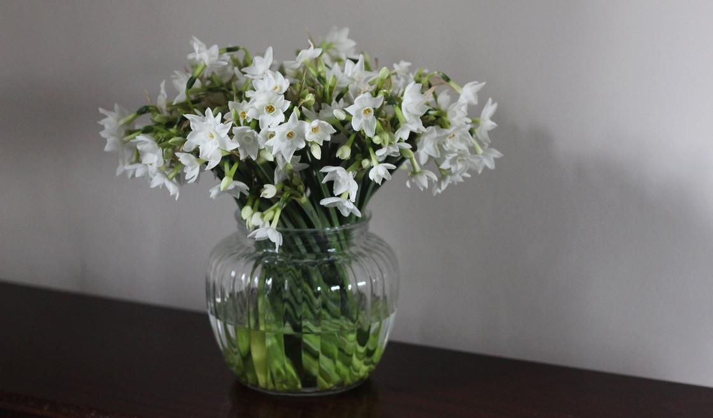 winter-narcissus-british