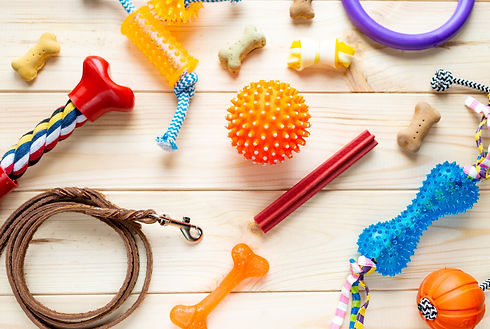 Different multicolored pet care accessories_ ring, bones, leash, collar, balls on wooden b