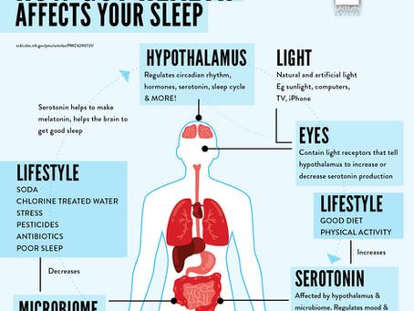 The Relationship Between Your Gut Health & Sleep