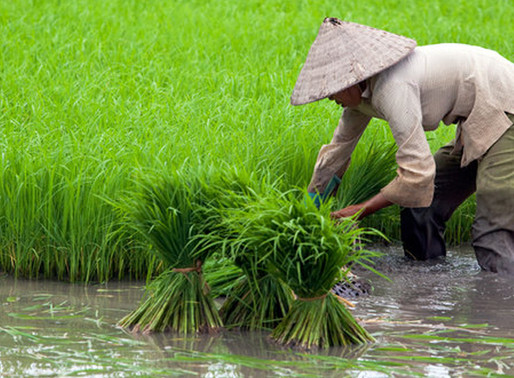 Opini | Manajemen Risiko Bencana Alam dan Asuransi Pertanian