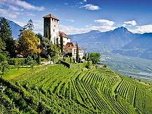 7/31(六)充滿德國色彩的東北義Trentino山區葡萄酒:卡維特Cavit合作社