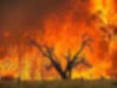 7/18(六)燒不死的浴火鳳凰 - Yarra Valley 澳洲最歐風的產區