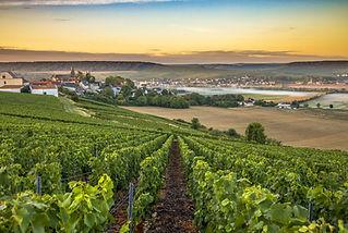 WINE - Champagne Vineyards.jpeg
