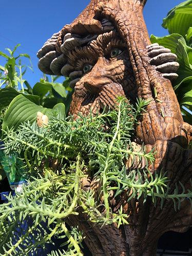 Tree Spirt Planter