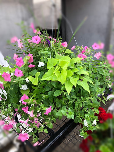 "24"" Mixed Hanging Basket"