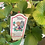 Thumbnail: Strawberry 'Emmy's Alpine'