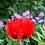 Thumbnail: Oriental Poppy