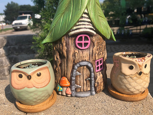 Owl succulent pot