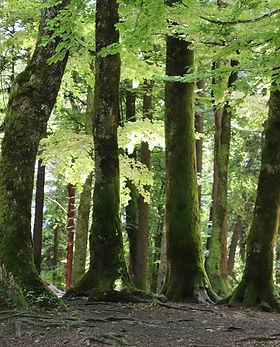 3806 arbres.jpg