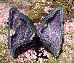 Papillon d'améthyste
