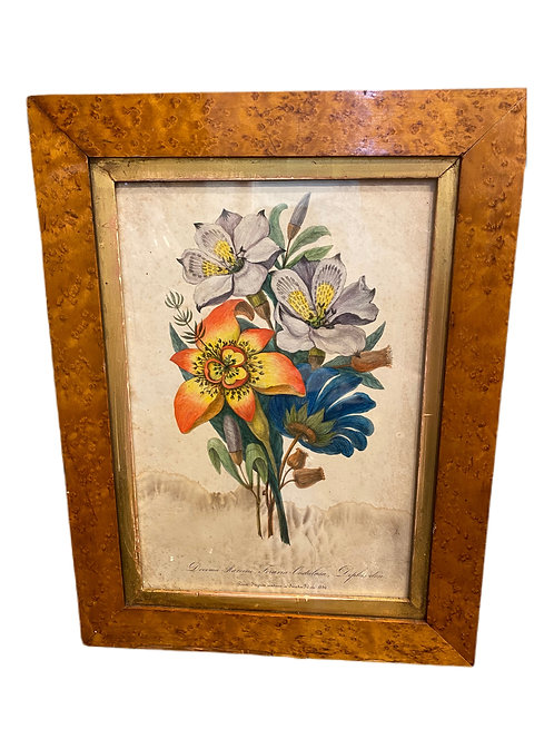 Pair of Large French Flowers with Tiger Maple Frames