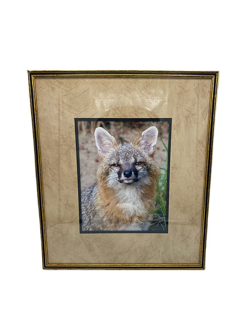 Framed Fox Picture