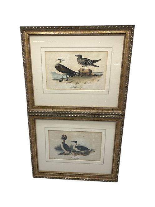 Pair of Horned Garebe Prints