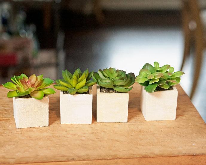 Small Square Succulents