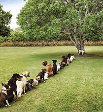 dogs queuing to pee.jpg