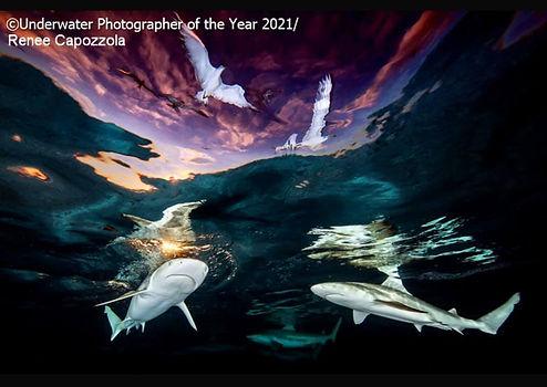 Underwater photographer of the year winn