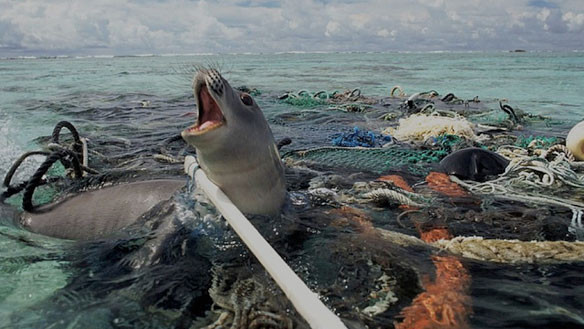 plastic-pollution-seal-trapped.jpg