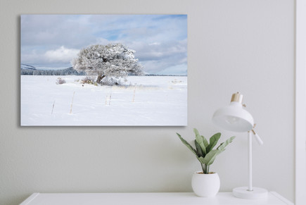 Winter Tree Horizontal