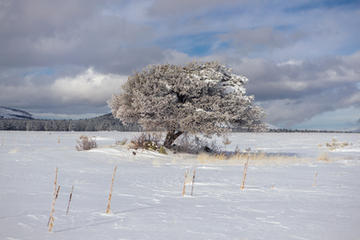 Tree in Winter horizontal