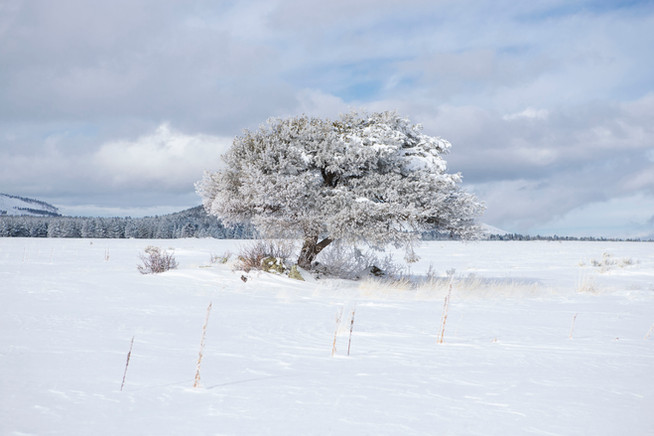 Snowball View