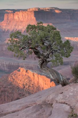 Canyon Lands