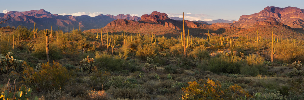 Cactus Panorama II