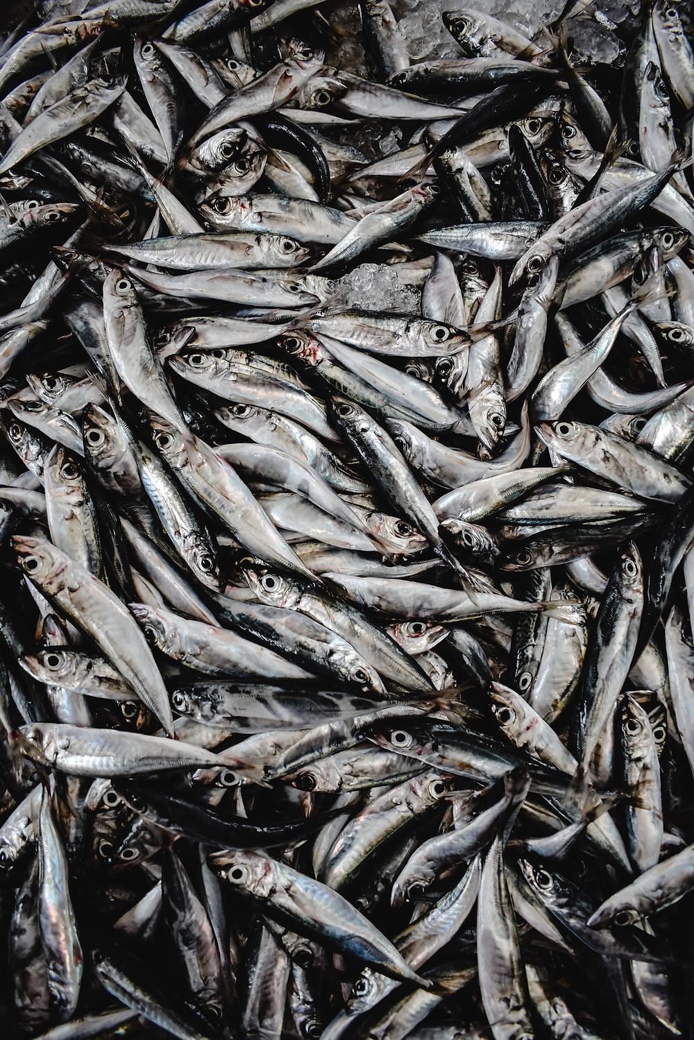 sardines omega-3 hair shedding