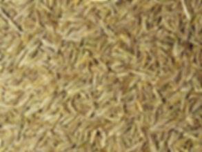 cumin-seeds.jpg