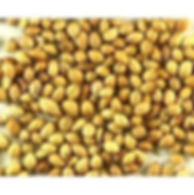 coriander-min-page-image.jpg