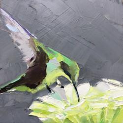 Hummingbird And Green Flower