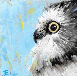 Sawhet Owl 6