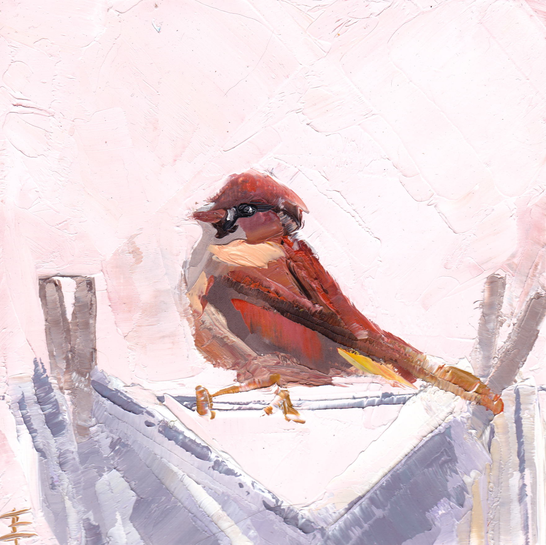 Sparrow on Laundry