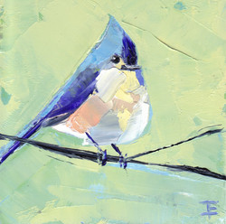 Tufted Titmouse #4