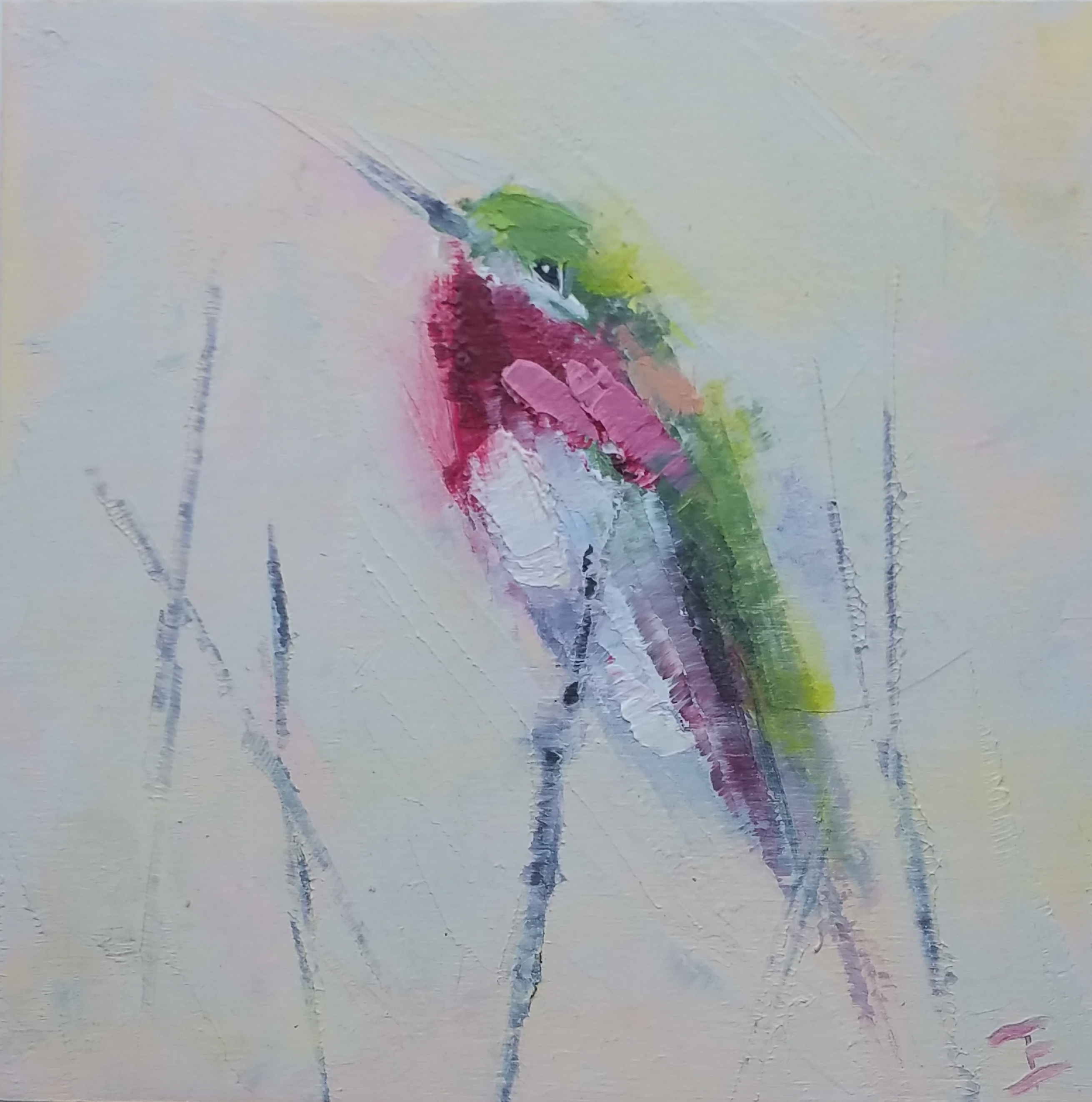Calliope Hummingbirds Male