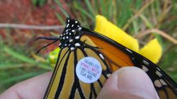 Monarch Will