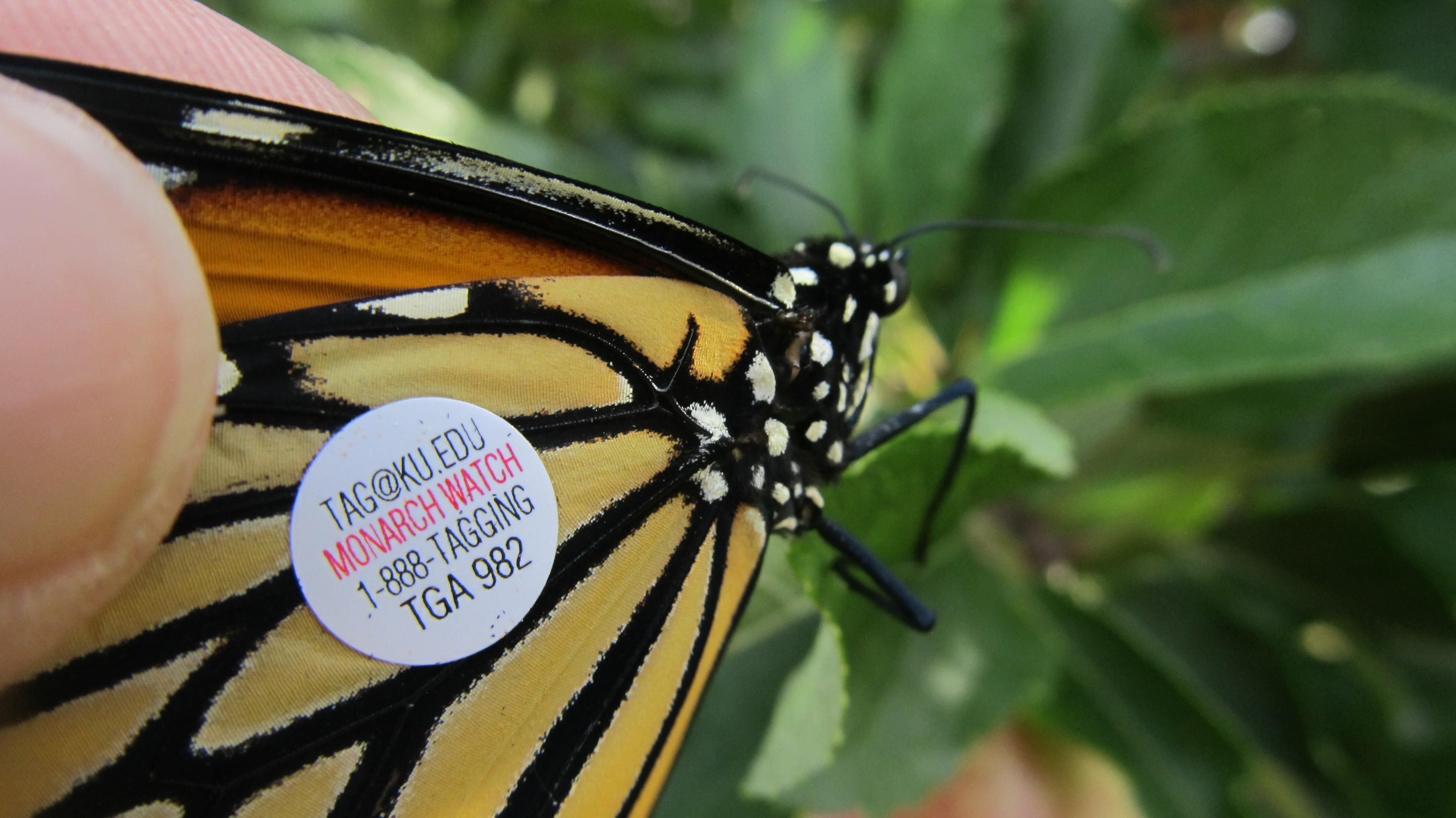Beth Butterfly