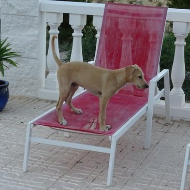 Kiron chair