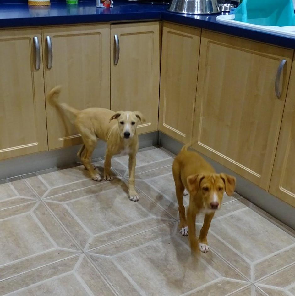 Kira and Kiron kitchen