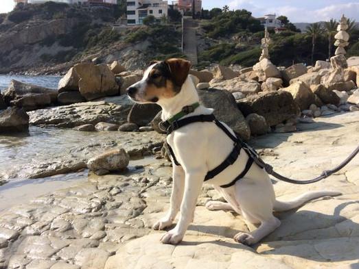 Diana beach.JPG