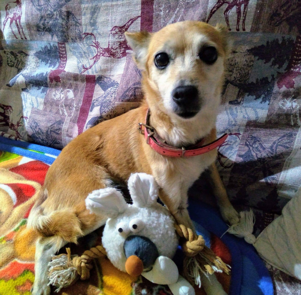 Maisy with her toys