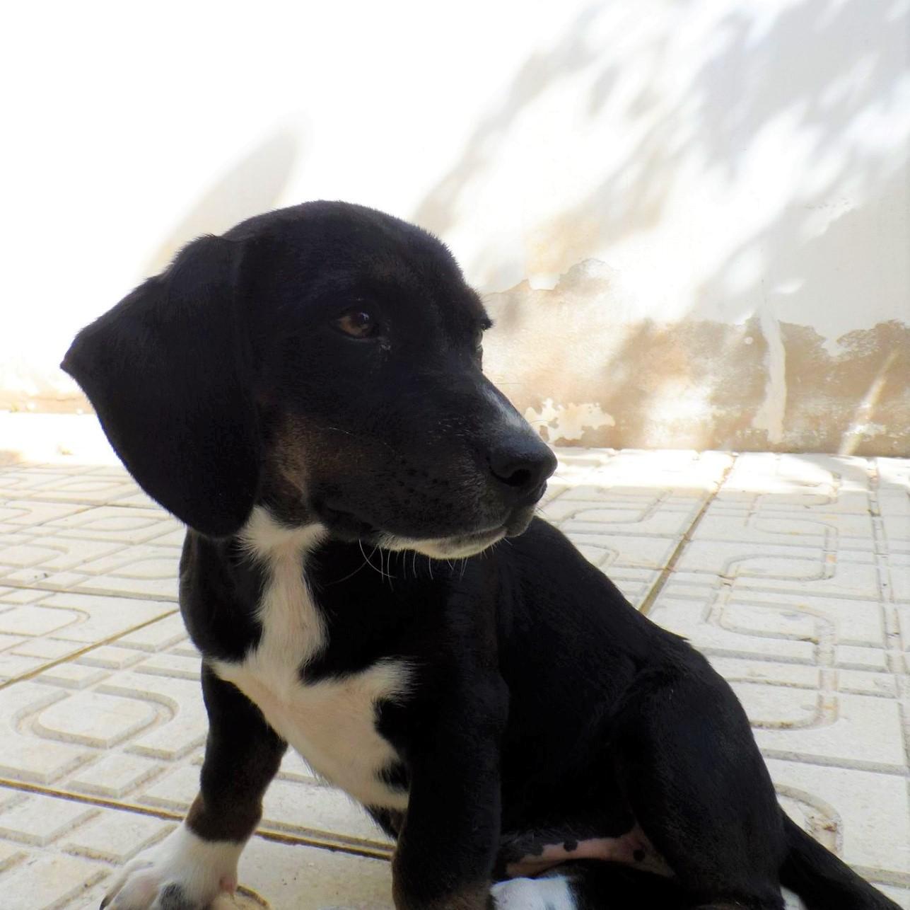 Penelope Asor adopted