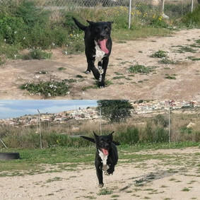Leia running.jpg