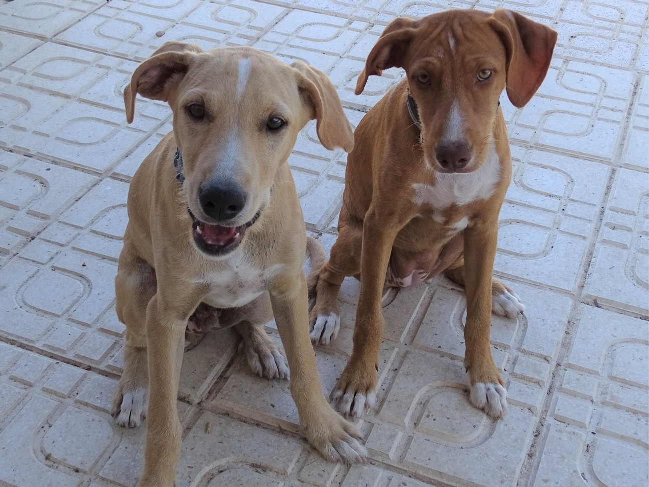 Kiron and Kira during training