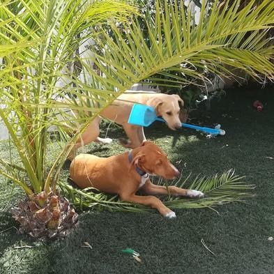 Kira and Kiron gardening