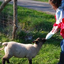 The lamb baby bottle