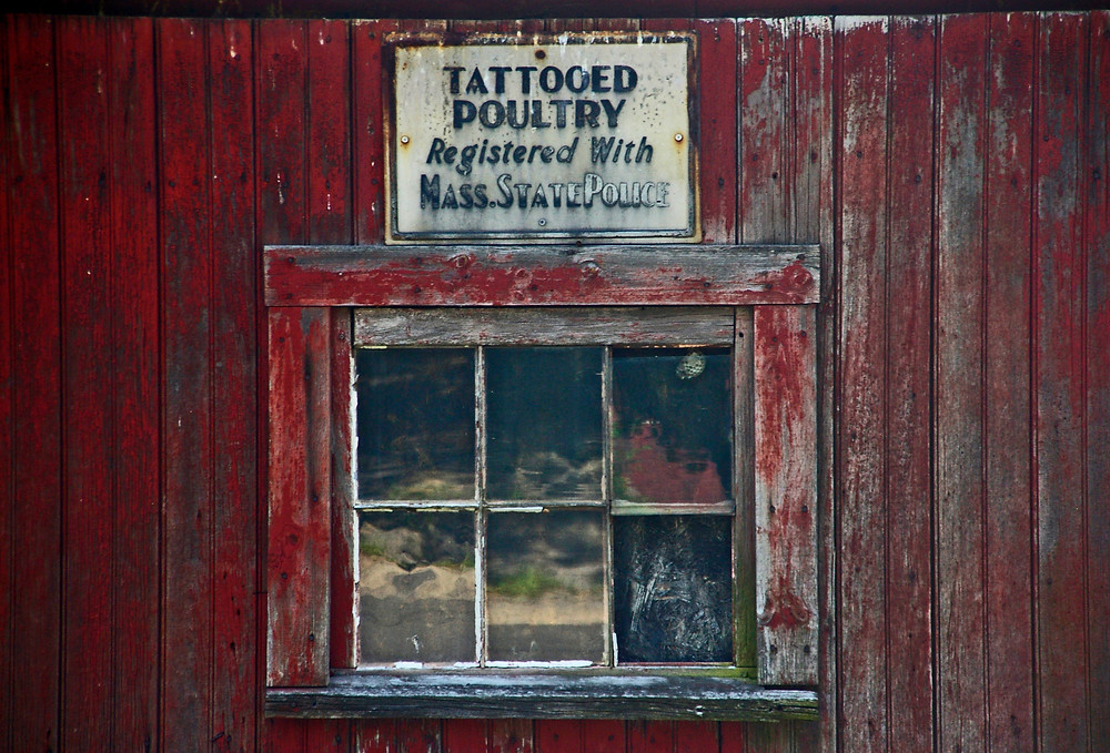 "Close-up photograph of an antique barn window with a weathered ""Tattooed Poultry"" sign above it."