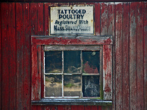 Tattooed Poultry Window by Mark Levitan