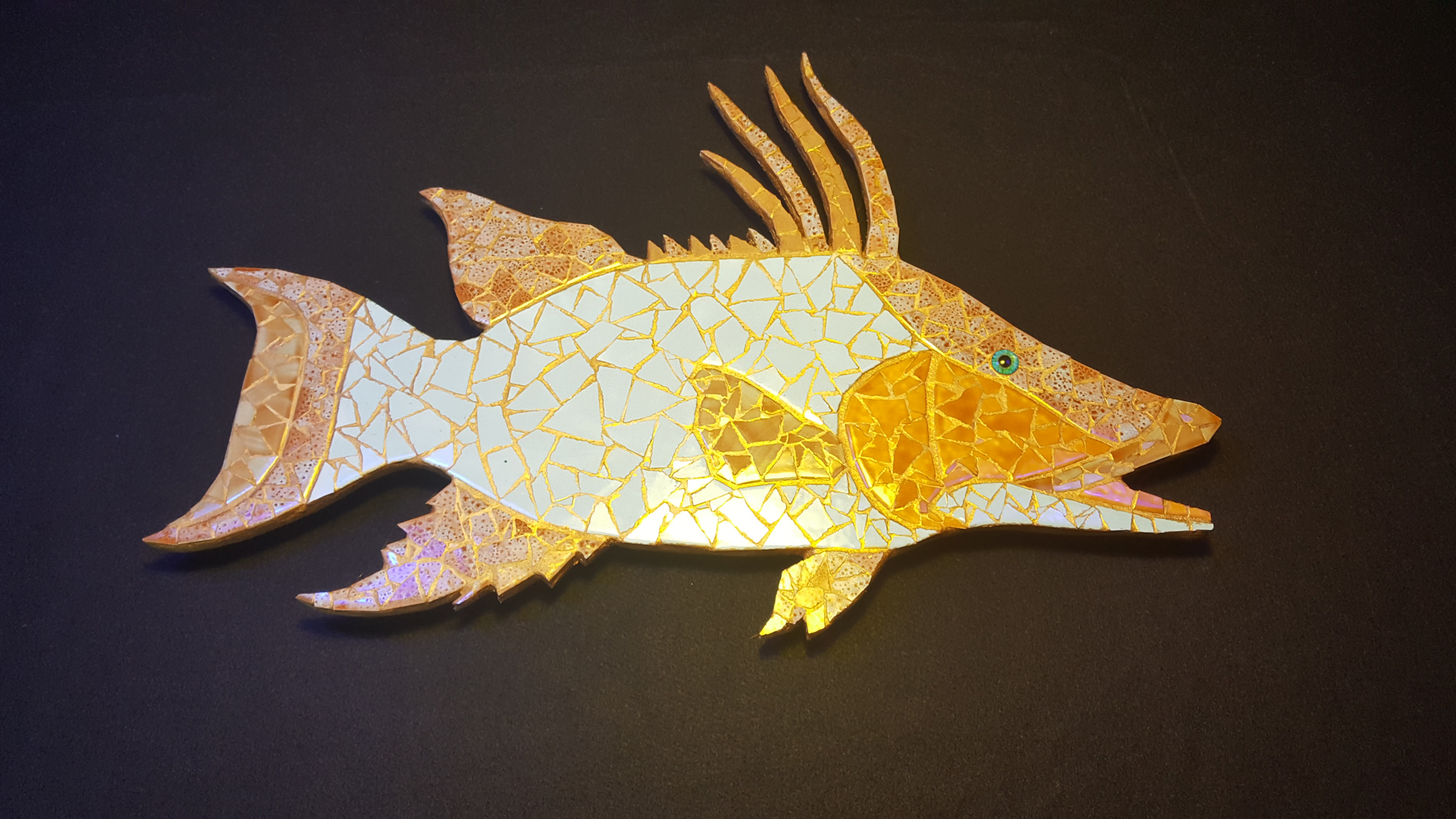 Hogfish - Medium