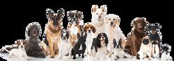 Dimostrazione di addestramento cani
